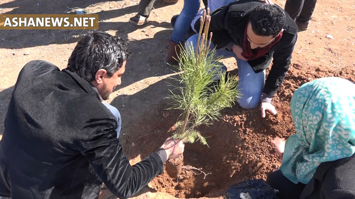 زراعة الأشجار من قبل المتطوعين في الحملة